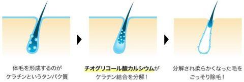 チオグリコール酸カルシウム 除毛
