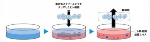 ヒト幹細胞上清液 サイトカイン