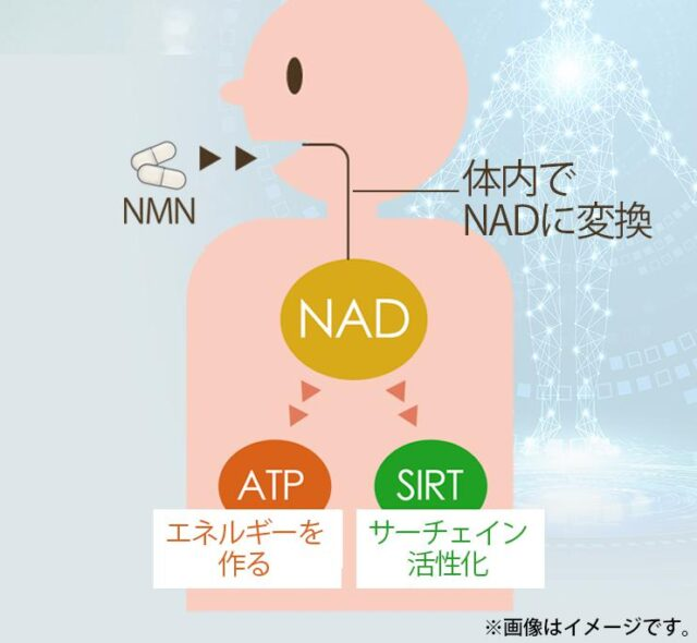 nonlie NMN125 特徴