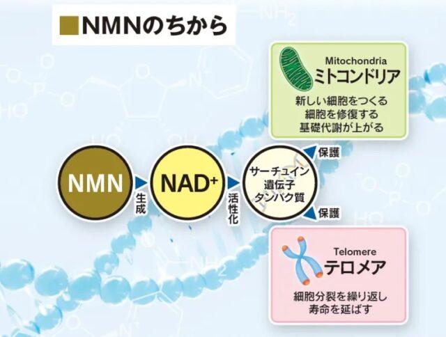 NMNセフィロト 特徴